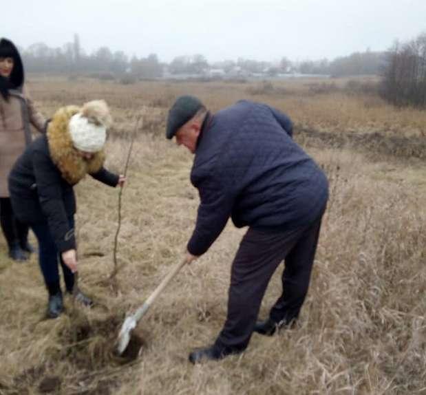 Брусилівський селищний голова Володимир Габенець висаджує деревця
